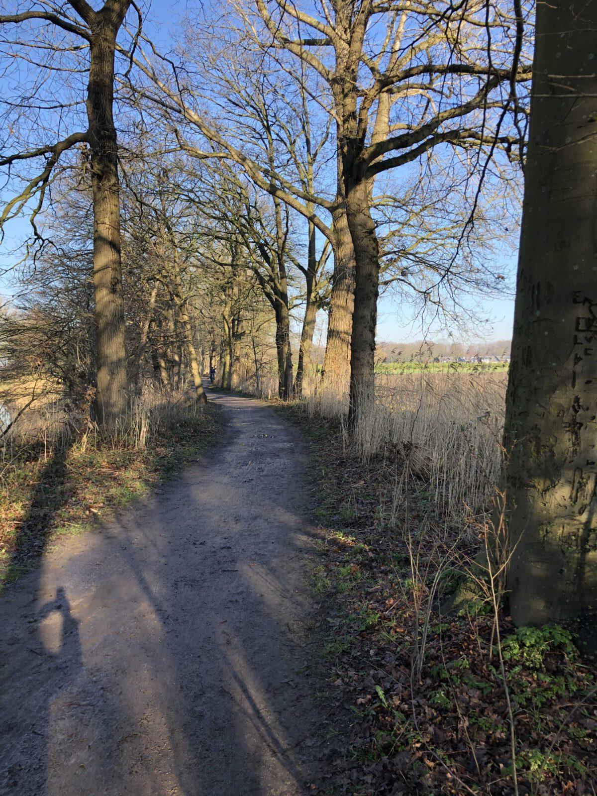 Snoeiwerk Kerkdijk / planning 22, 23 en 24 februari